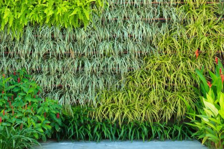 Photo for Vertical garden - Royalty Free Image