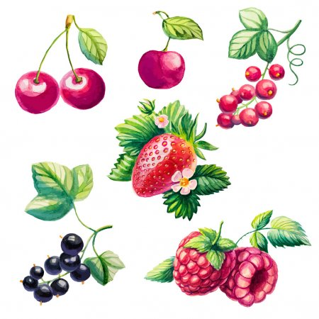 Illustration pour Ensemble de baies. Framboises, cerises, fraises, groseilles . - image libre de droit