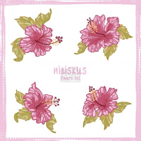 Hibiscus flowers hand drawn  set