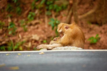 Cute monkey sits
