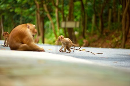 Cute monkey near road