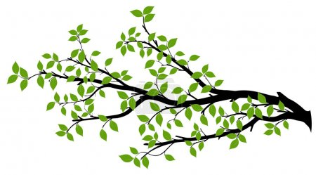 Illustration for Tree branch with green leaves over white background. Vector graphics. Artwork design element. - Royalty Free Image