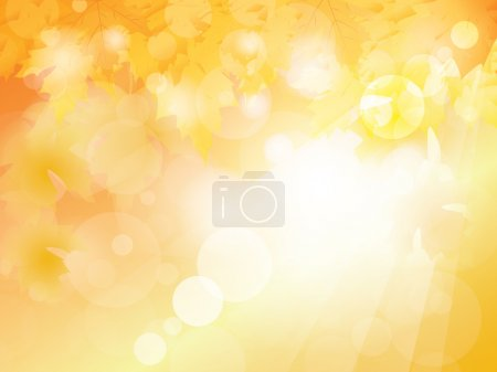 Warm summer sunny with leaves background vector