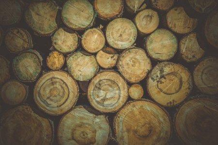 Raw Wood Logs Background