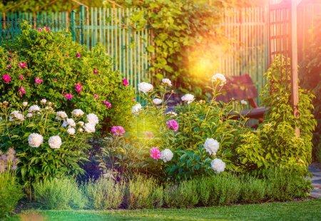 Photo pour Jardin d'arrière-cour fleuri ensoleillé. Jardin d'été Fleurs . - image libre de droit