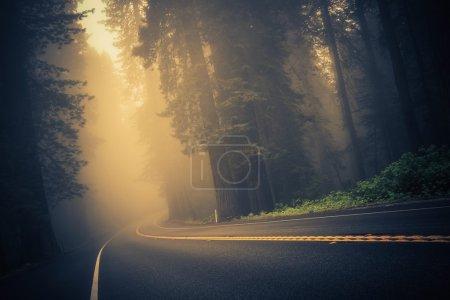 Photo pour Foggy Forest Road. Redwood Highway, Californie, États-Unis . - image libre de droit