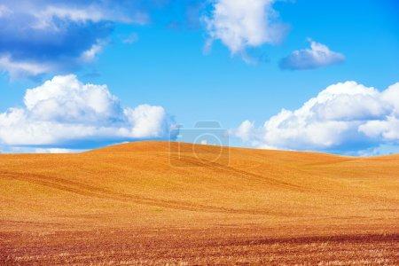 Photo pour Scenic Stubble Farmland et le ciel bleu. Paysage ensoleillé scénique. Couper les tiges des plants de grain laissés coller hors du sol. - image libre de droit