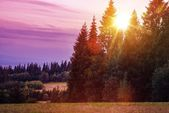 Scenic Forest Edge Sunset