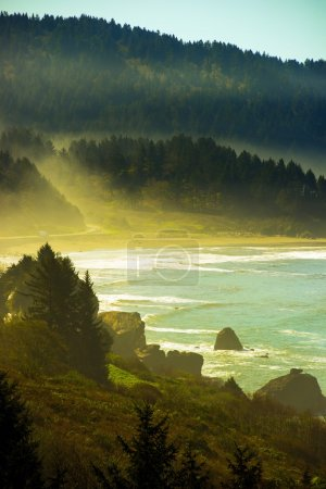 Photo for Northern California Pacific Coast Near Crescent City, California, United States. Foggy Redwood Highway. - Royalty Free Image