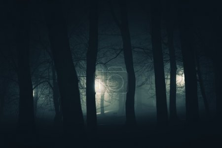 Photo for In the Dark Spooky City Park. Foggy Creepy Park at Night. - Royalty Free Image