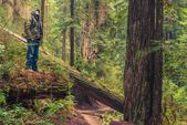 Forest Trail Hiker