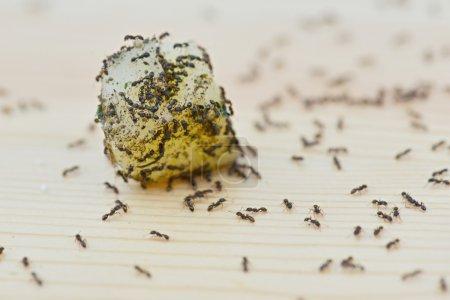 Lot of ants on food