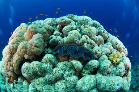 Reef and coral