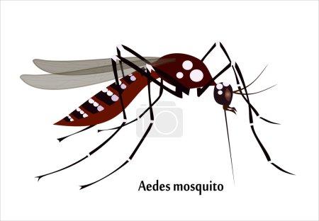 Realistic Mosquito species