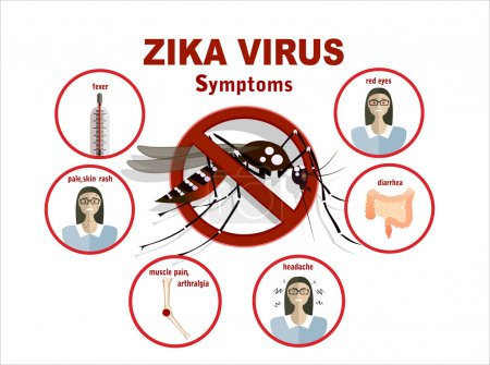 Illustration for Flat design illustration concepts Zika virus symptoms infographics with figures and text - Royalty Free Image