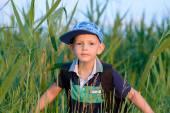 Kleiner Junge in frischem Grün Schilf versteckt
