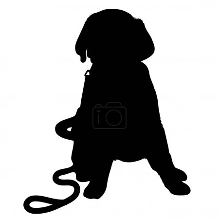 Puppy Kitten Silhouette