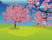 Blooming Sakura Tree on Lawn