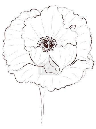 Poppy Lineart