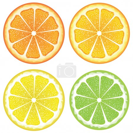 Illustration for Grapefruit, lemon, orange and lime slices, colorful background. - Royalty Free Image