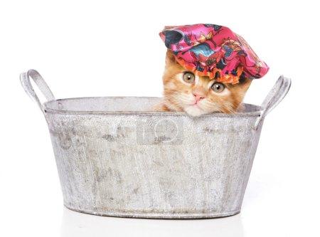 Photo pour Chat dans une baignoire avec bonnet de douche isolé sur fond blanc - image libre de droit