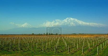 Mountain Ararat, Vineyards, Ararat valley