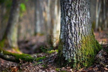 Nadelbaum in Wildnisgebiet