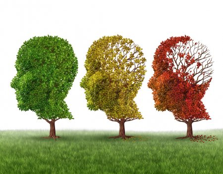 Photo for Memory loss and brain aging due to dementia and alzheimer's disease as a medical icon of a group of color changing autumn fall trees shaped as a human head losing leaves as intelligence function on a white background. - Royalty Free Image
