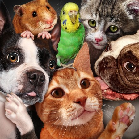 Photo pour Pet group concept as dogs cats a hamster and budgie gathered together as a symbol for veterinary care and support or pets store design element for home animals advertising and marketing. - image libre de droit
