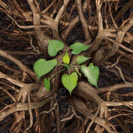 Photo pour Concept de réussite du travail d'équipe et travail en équipe pour la croissance de la prospérité en tant que groupe d'arbres se réunissant et se connectant en tant qu'organisation unique pour produire une plante de plantation de feuilles vertes comme symbole d'une coopération réussie . - image libre de droit