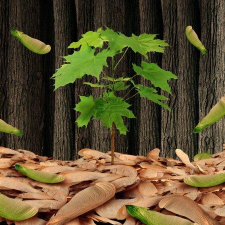 Photo pour Concept de semences comme un groupe arbre feuille d'érable sur un sol de forêt avec un arbrisseau individuel de plus en plus élevé comme un symbole de métaphore et de la vie des affaires pour avoir du succès en compétition contre une foule nombreuse. - image libre de droit