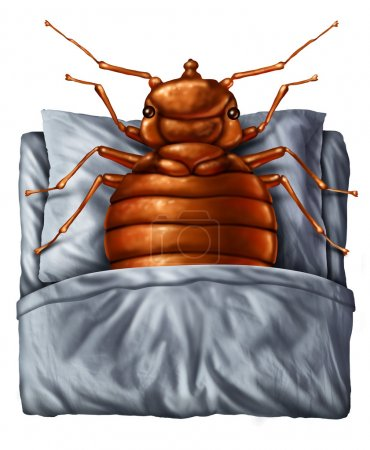 Bedbug Concept