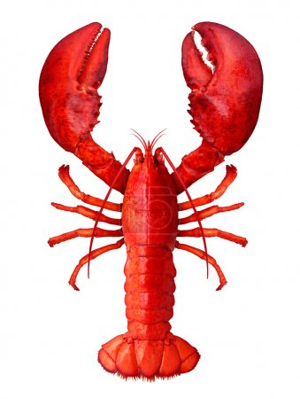 Lobster isolated on a white background as fresh se...