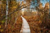 Wooden boarding path way pathway in autumn forest