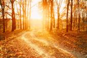 Winding Countryside Road Path Walkway Through Autumn Forest. Sunset Sunrise