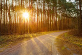Road, Path, Walkway Through Forest. Sunset Sunrise In Autumn Forest