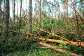 Glücksfall im Wald. Sturmschäden