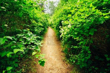 Photo pour Allée voie chemin avec le vert des arbres et arbustes dans le jardin. Belle allée dans le parc - image libre de droit