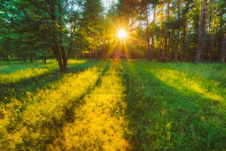 Sunlight In Green Coniferous Forest, Russian Nature