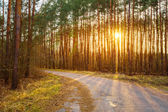 Road, path, walkway through forest. Sunset Sunrise In Autumn Con