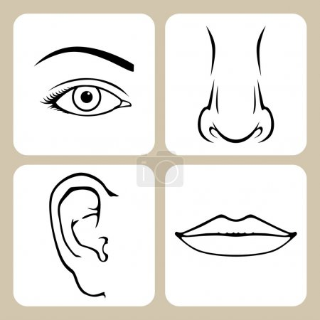 Illustration for Contour image of nose, eye, mouth, ear - Royalty Free Image