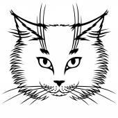 Cute cat muzzle