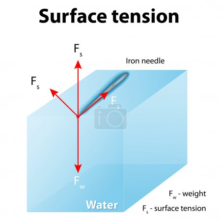 Surface tension. Iron needle stay atop the liquid because of surface tension.