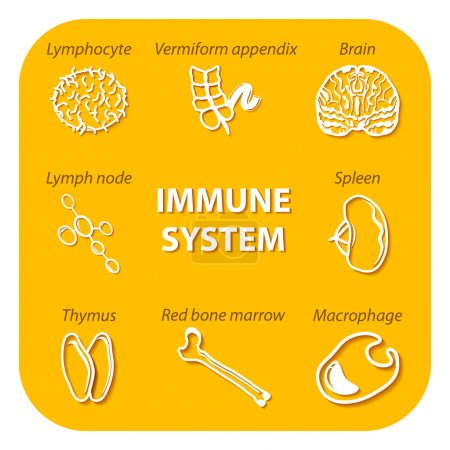 Set icons with shadow. Human Immune system