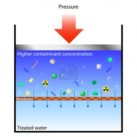 Reverse osmosis means forcing contaminated water t...