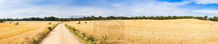 Bales of straw in wheat field. High resolution pan...