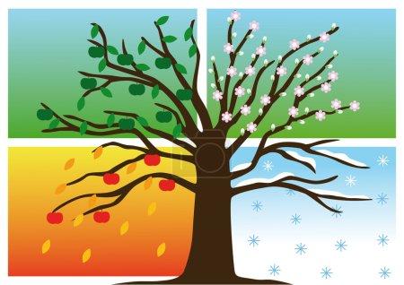Four Seasons with apple tree