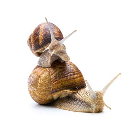 Snails Teamwork