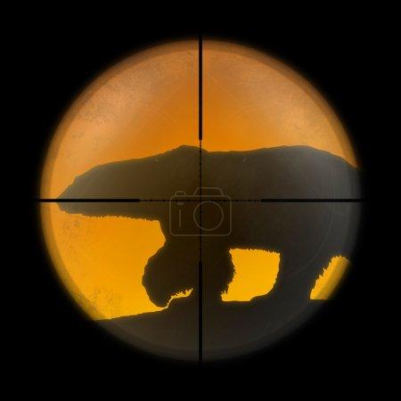 Polar bear in the sniper scope hunter.