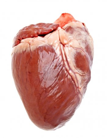 Pig heart on a white background...